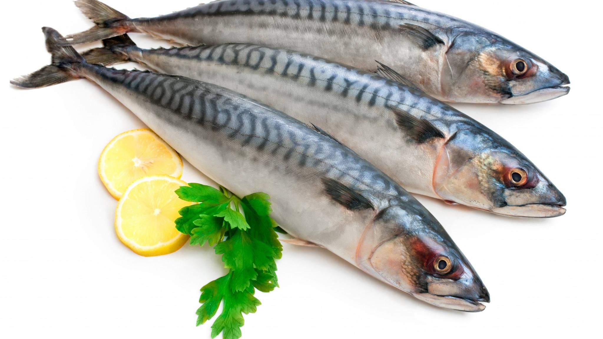 Salvelinus أكثر أنواع السمك المفيدة لصحة | صحيفة معاد